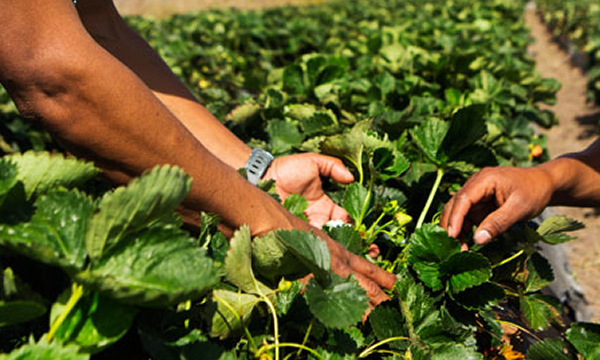 Empowering Smaller Farmers